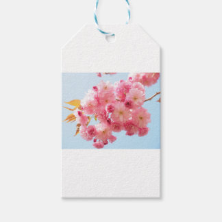 Pink Japanese Cherry Blossom Photograph Gift Tags