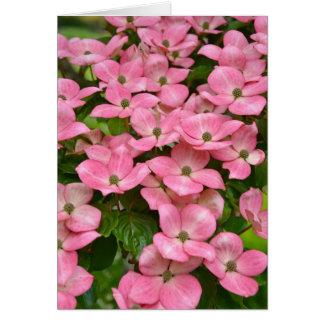 Pink kousa dogwood flowers greeting card