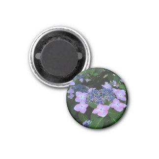 Pink Lacecap Hydrangea ~ magnet