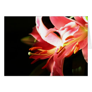 Pink Lilies Greeting Cards
