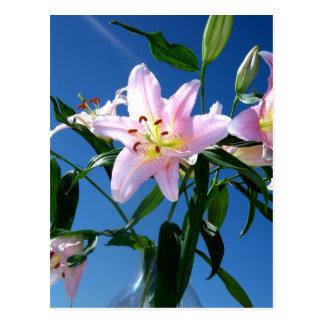 Pink Lilies Postcard