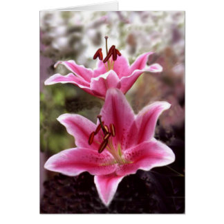 Pink lillies card