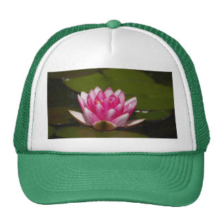Pink Lilly and Lilly Pads Cap