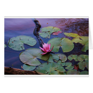 Pink Lilly Pad Card