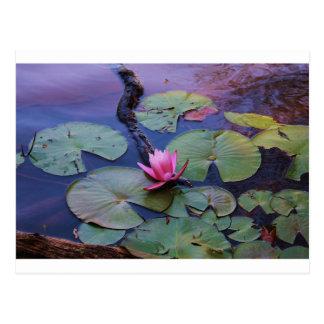Pink Lilly Pad Postcard