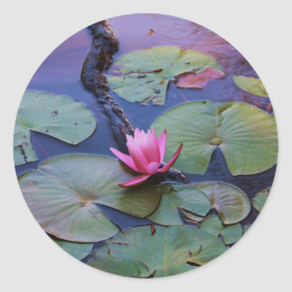 Pink Lilly Pad Round Sticker