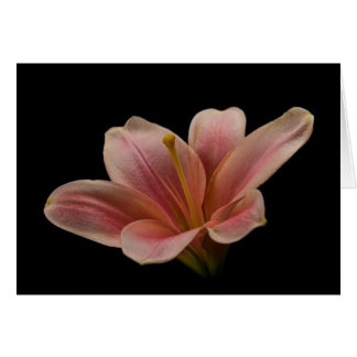 Pink Lily Blank 5x7 Greeting Card