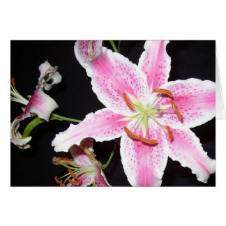 Pink Lily - Blank Greeting Card