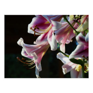 Pink Lily Flowers Garden Floral art prints Framed Posters