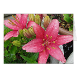Pink Lily Photo Blank Note Card