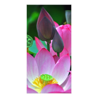 Pink Lotus Blossoms Customised Photo Card