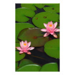 Pink lotus water lily flower  garden, custom stationery