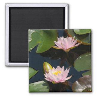 Pink Lotus Waterlilies magnet