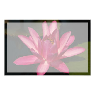 Pink Lotus Waterlily Flower Stationery
