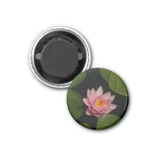 Pink Lotus Waterlily magnet