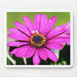 Pink Macro Flower Mouse Pads
