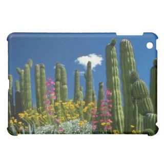 Pink Many plants, Sonoran Desert, Arizona flowers iPad Mini Covers