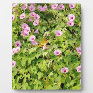 Pink Morning Glories Bush Plaque