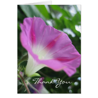 Pink Morning Glory Flower Greeting Card