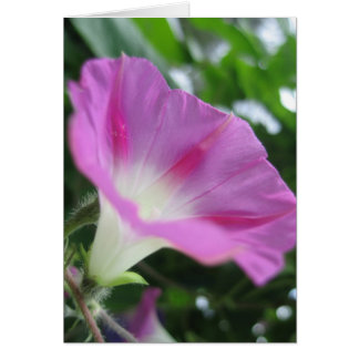 Pink Morning Glory Flower Stationery Note Card