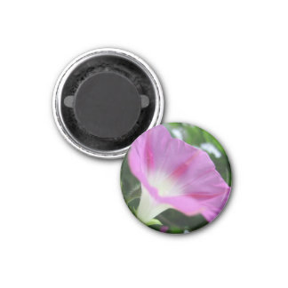 Pink Morning Glory Flower Magnets