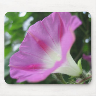 Pink Morning Glory Flower Mousepad