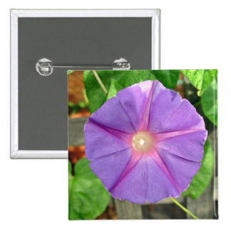 Pink Morning Glory flower on a sunny day Pinback Button