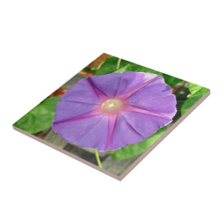 Pink Morning Glory flower on a sunny day Ceramic Tiles