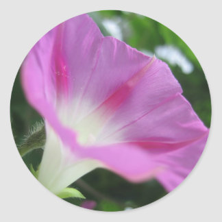 Pink Morning Glory Flower Round Stickers