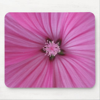 Pink Morning Glory ~ Macro Photography Mouse Pad