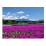 Pink moss and Mt. Fuji in the background Postcards