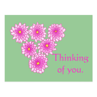 Pink Mums Flowers Thinking of you Postcards