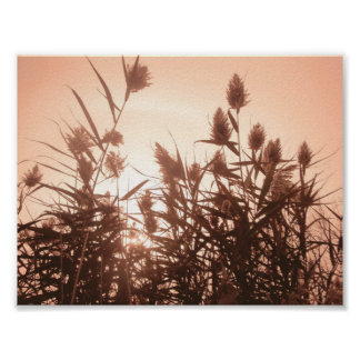 Pink Nature poster
