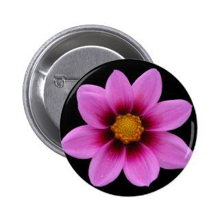 Pink Northwest Cosmos Flower Buttons