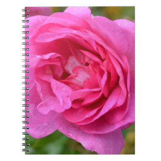 Pink November Rose Notebook