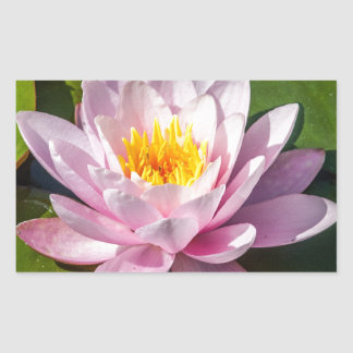 Pink Nuphar Lutea Water Lily Flower in full Bloom Rectangular Sticker
