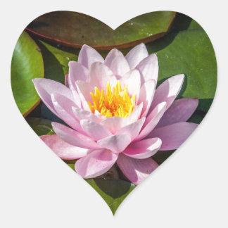 Pink Nuphar Lutea Water Lily Flower in full Bloom Heart Sticker