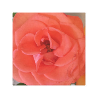 "Pink Orange Rose  (12"" x 12""), 3.8 cm (1.5"")Single Canvas Print"