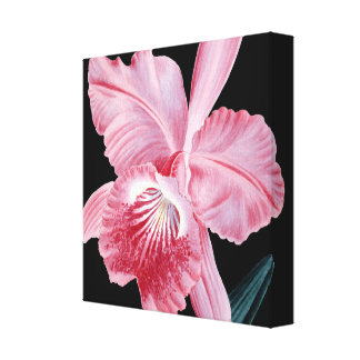 Pink orchid black canvas