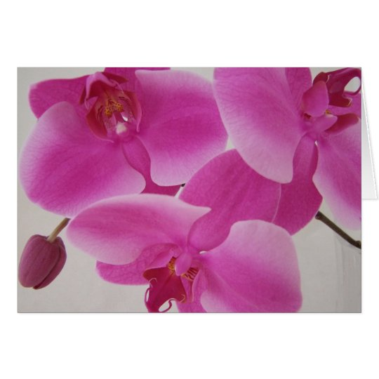Pink Orchid Cluster Card