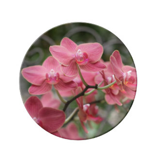 Pink Orchid flowers Porcelain Plate