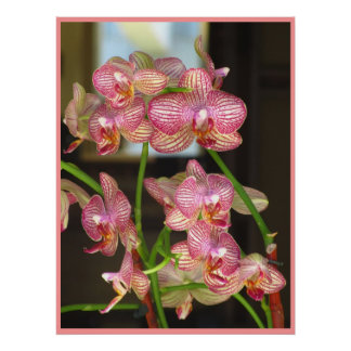 Pink Orchid Flowers Print
