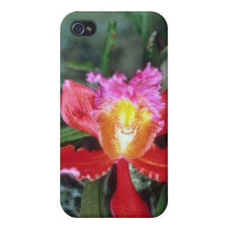 Pink Orchid, Machu Picchu flowers Cover For iPhone 4