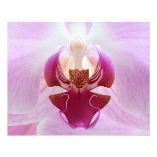 Pink Orchid Macro Photo Print
