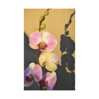 Pink Orchids Light Canvas Gallery Wrap Canvas