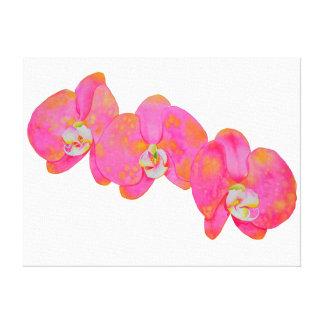Pink Orichids Canvas Print