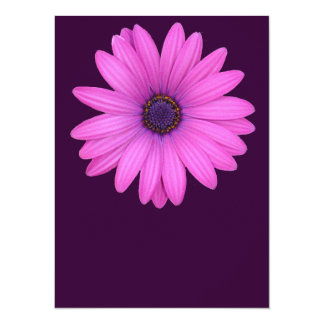 Pink Osteospermum and Transparent Background Personalized Invitations