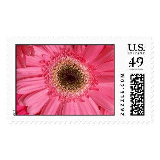 Pink Panther Postage Stamp