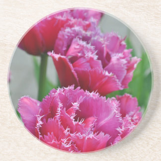 Pink parrot tulips coaster