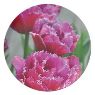 Pink parrot tulips plates